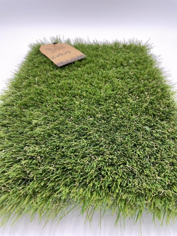 Turfgrass Lotus 2