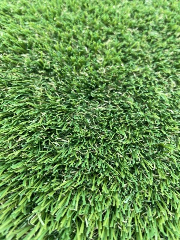 Turfgrass Lotus 3