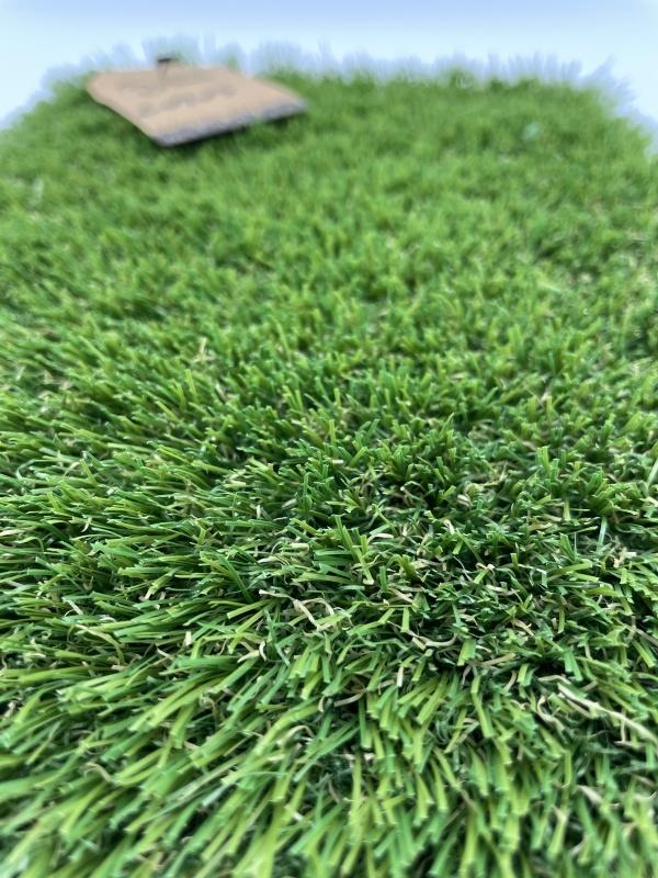 Turfgrass Lotus 4