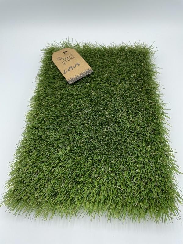 Turfgrass Lotus 5